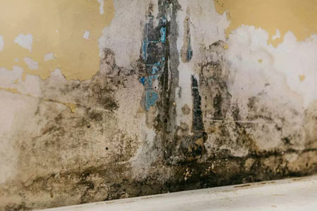 Mold remediation and  mold damage
