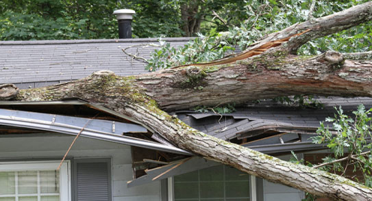 Flood Damage Restoration in Dallas-Fort Worth: Storm Damage Restoration in  Plano, TX