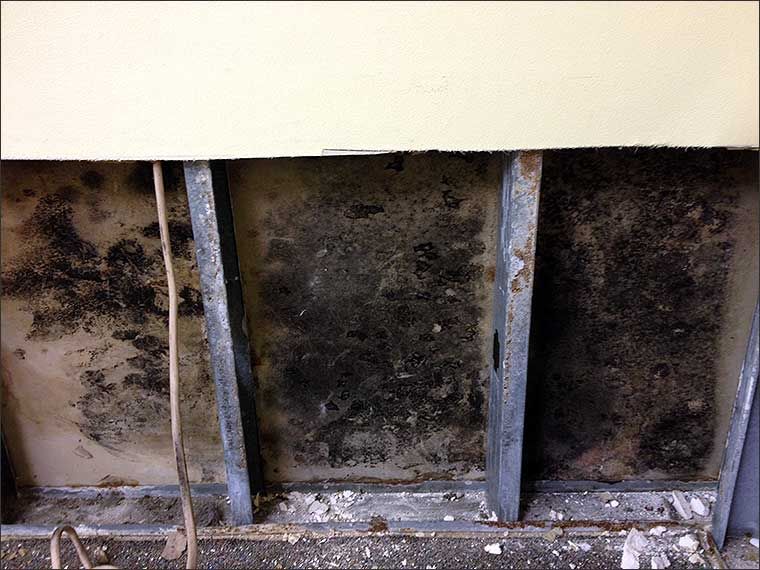 Mold Remediation And Mold Removal In Dallas Fort Worth