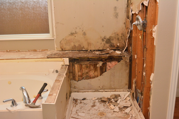Mold Remediation And Mold Removal In Dallas Fort Worth Tx