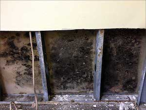black mold damage inside wall